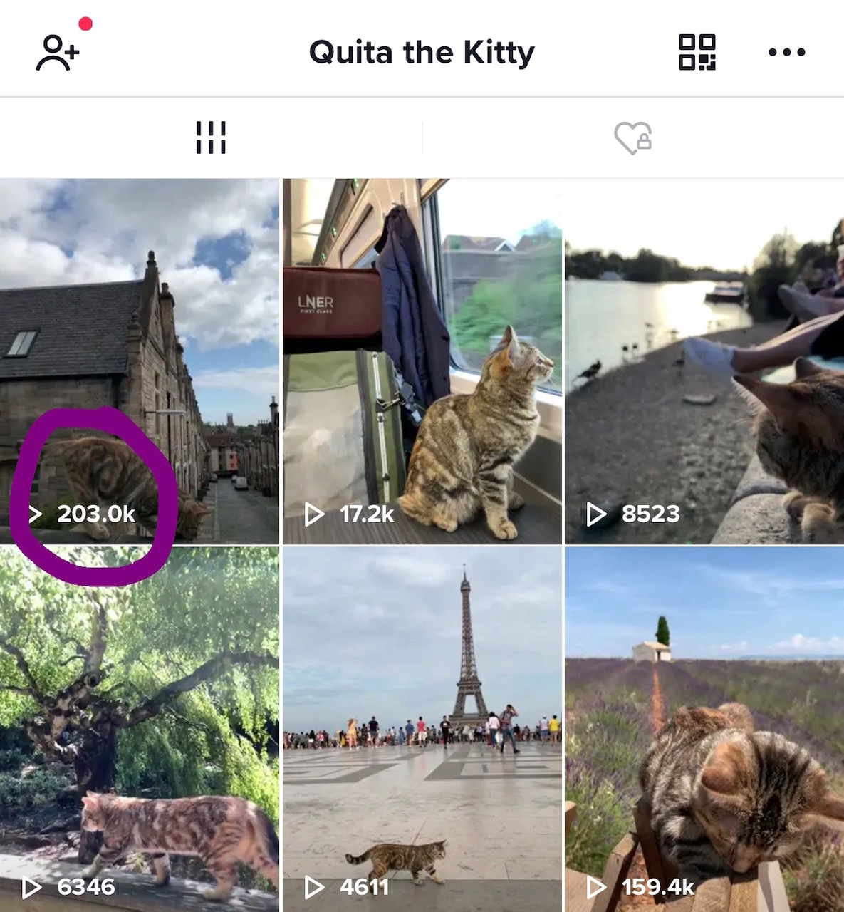 2019-08-01 (Quita the Kitty) TikTok Edinburgh video view count