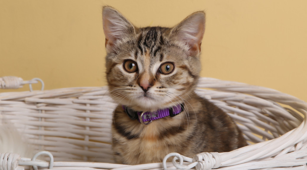 Quita the Kitty in a basket